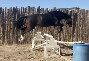 Round Pen Jump Over